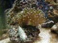 Akvariet den 4 april 2008